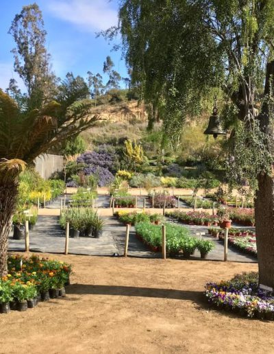 Galeria Jardín Suizo 12