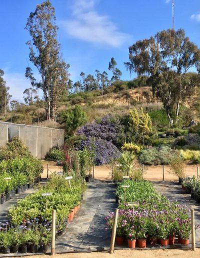 Galeria Jardín Suizo 13