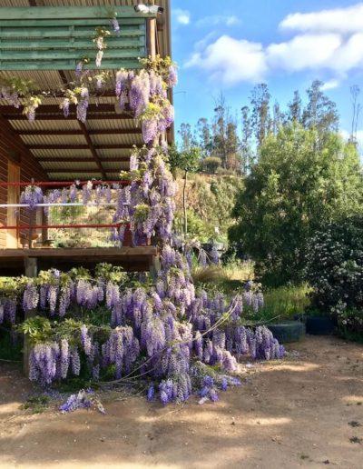 Galeria Jardín Suizo 14