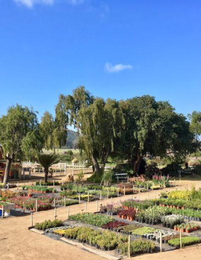 Galeria Jardín Suizo 15