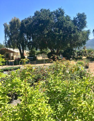 Galeria Jardín Suizo 17