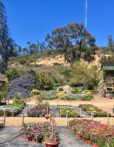 Galeria Jardín Suizo 18