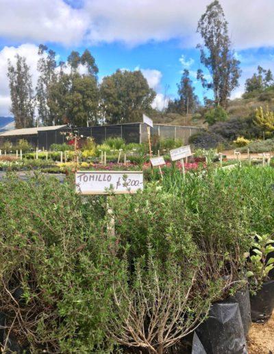 Galeria Jardín Suizo 2
