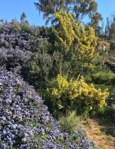 Galeria Jardín Suizo 23