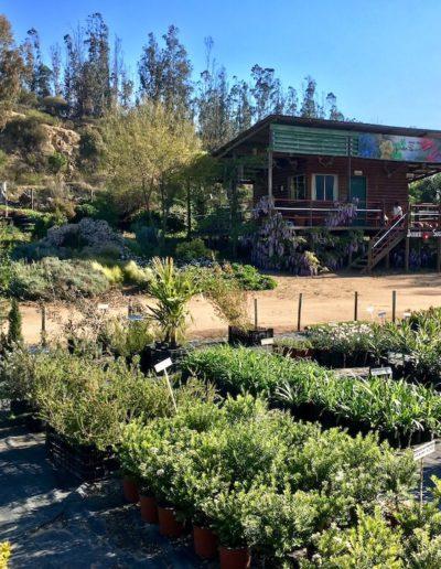 Galeria Jardín Suizo 31