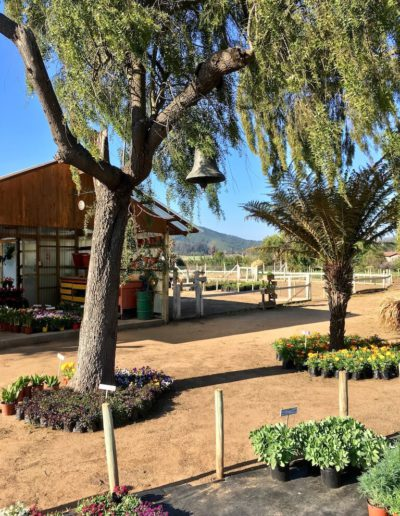 Galeria Jardín Suizo 33