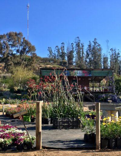 Galeria Jardín Suizo 35