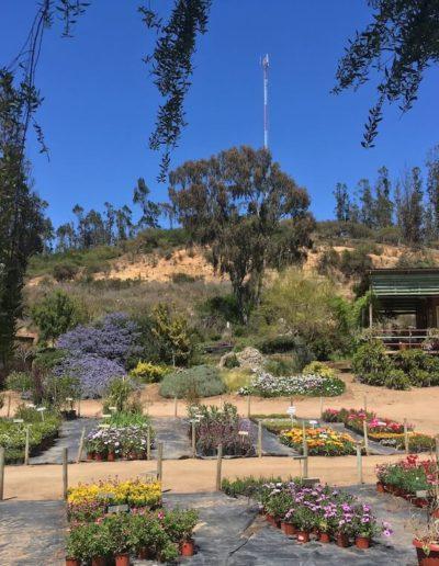 Galeria Jardín Suizo 38