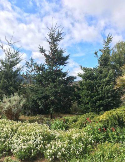 Galeria Jardín Suizo 5