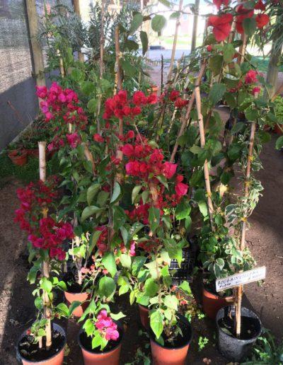 Producto Jardín Suizo 1