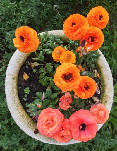 Producto Jardín Suizo 13