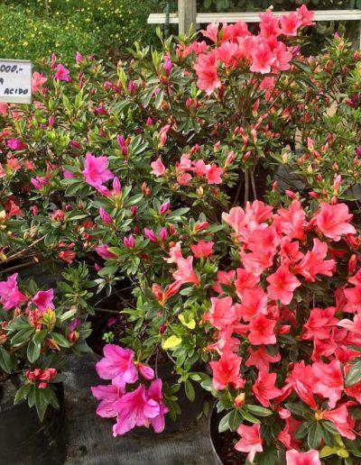 Producto Jardín Suizo 14