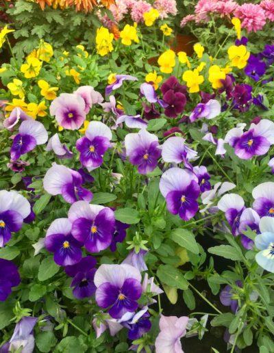 Producto Jardín Suizo 18