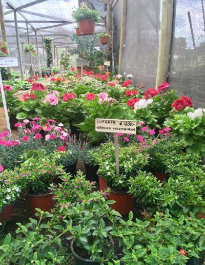Producto Jardín Suizo 2