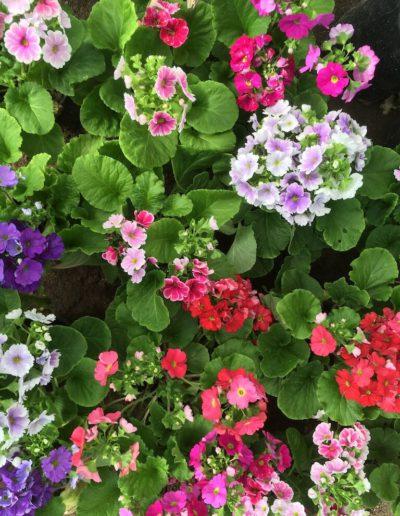 Producto Jardín Suizo 20