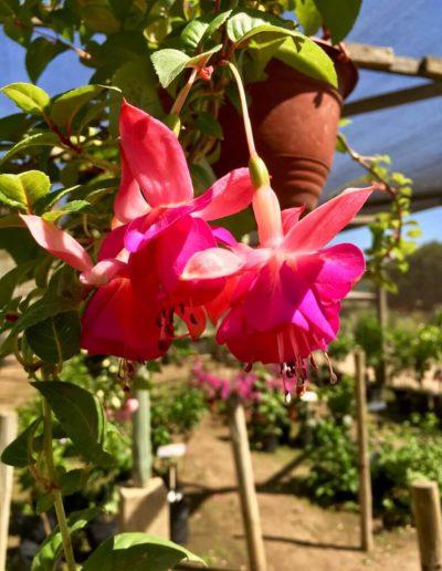 Producto Jardín Suizo 22