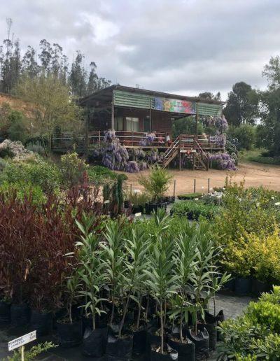 Producto Jardín Suizo 3