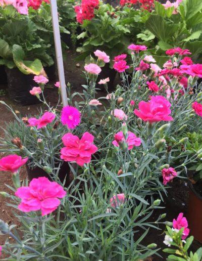 Producto Jardín Suizo 8