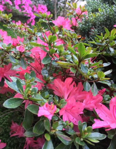 Producto Jardín Suizo 9